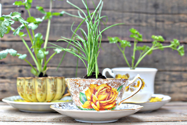 Herbs In A Teacup