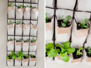 Shoe Rack Herb Garden