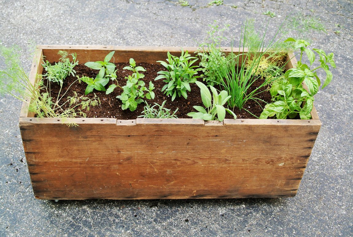 Mobile Box Herb Planter