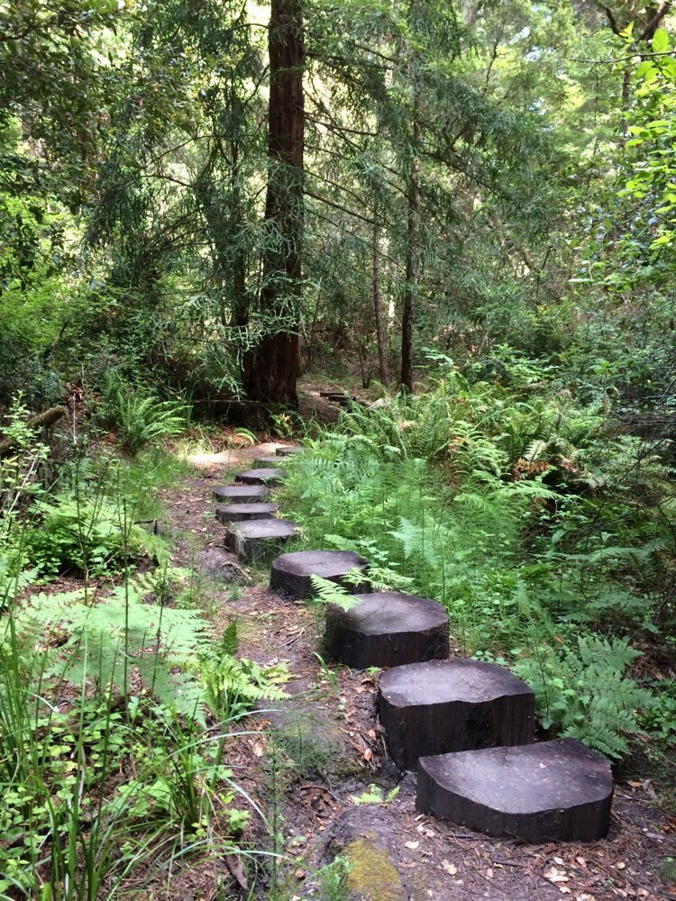 Steps made of tree trunks on the trail