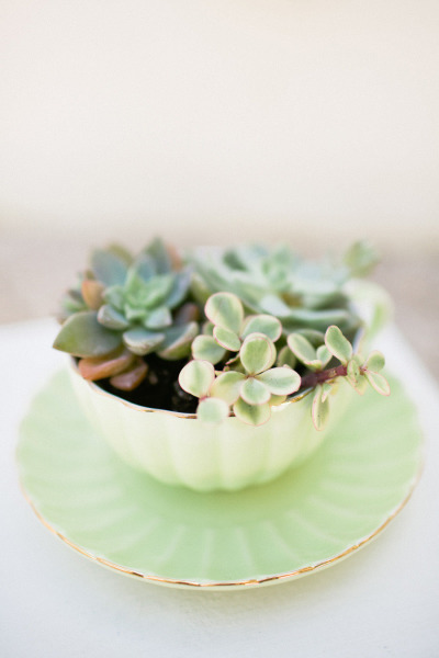 Upcycle a Tea Cup into a Planter