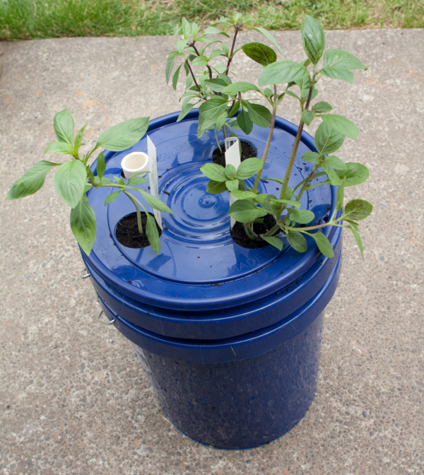 Self Watering Basil Planter