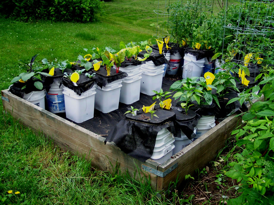 Self Watering Container out of Buckets