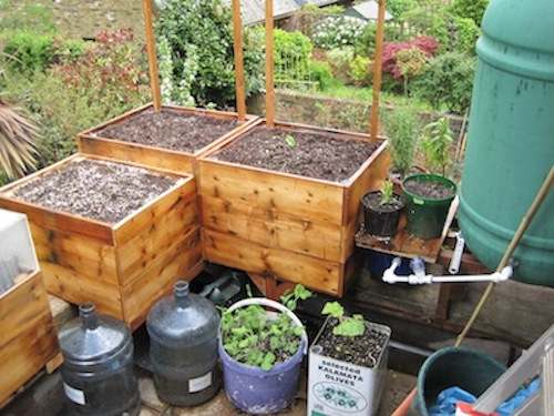 Self watering container gardening