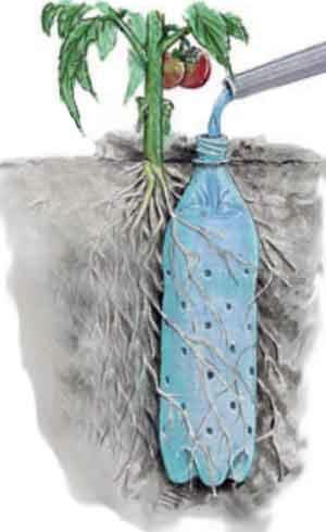 Soda Bottle Drip Feeder for Garden Plants