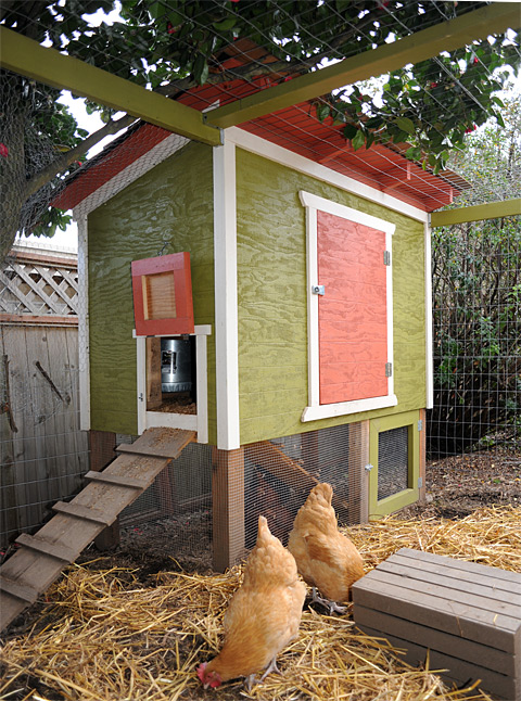 Urban Chicken Coop