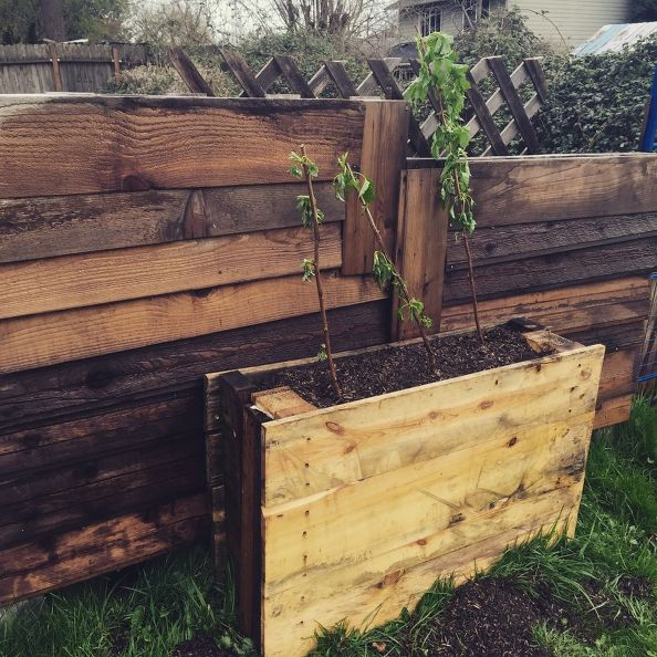 Upright Pallet Raised Beds