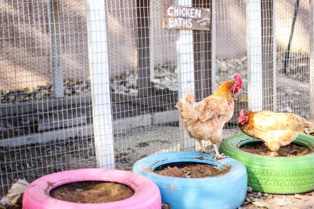 Repurpose Old Tires Into Chicken Baths