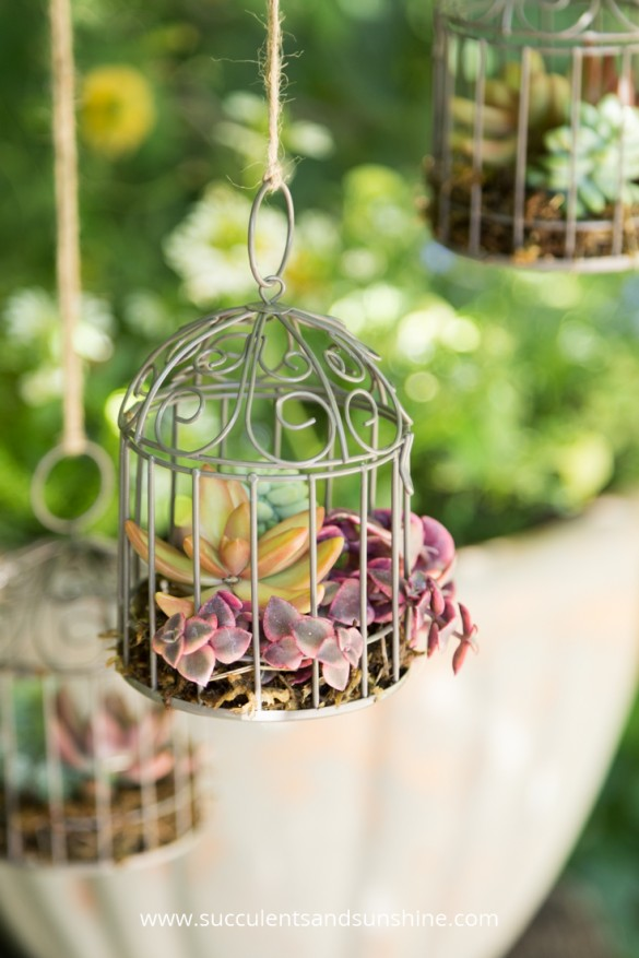 miniature succulent bird cages