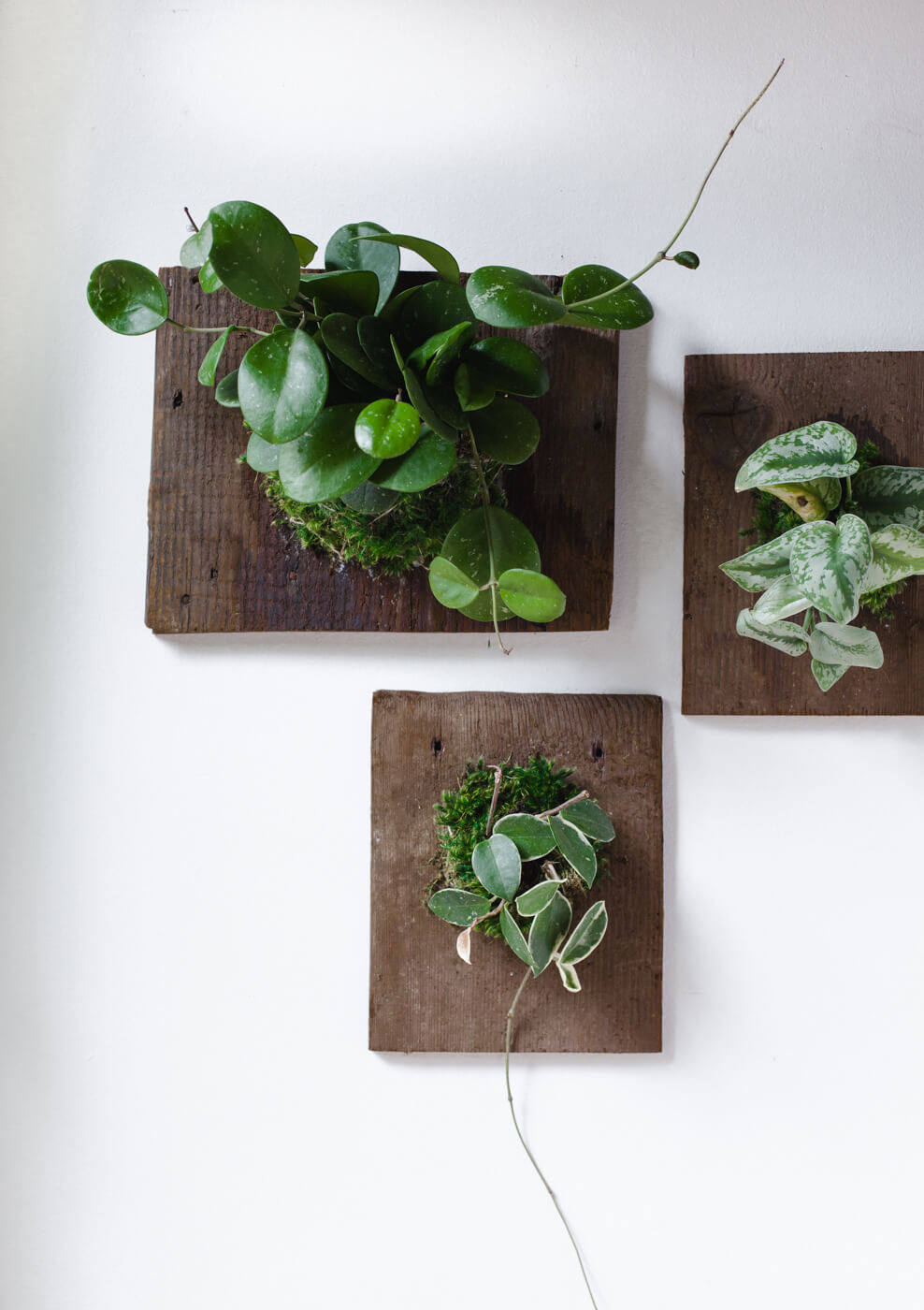 Display Your Plants on Wooden Boards