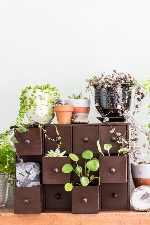 Plant Drawers