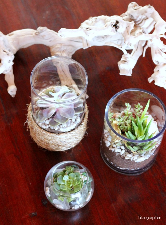 Dollar Store Terrariums