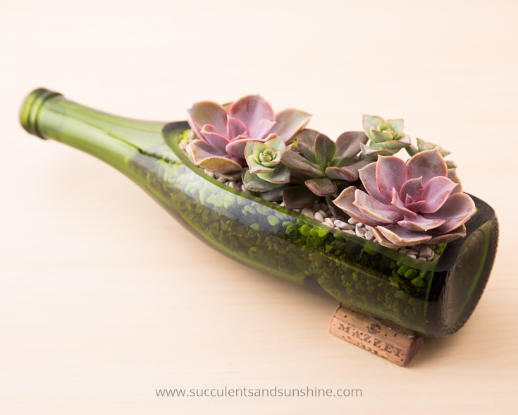 Succulent Wine Bottle Centerpiece